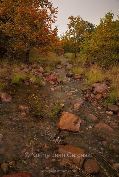 A stream runs through Gardner Canyon during October in the Santa Rita Mountains, Coronado National Forest, Sonoita, Arizona, USA.