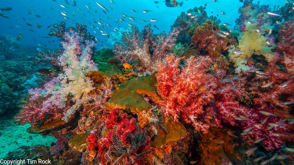 Triton Bay Dec 2019 (West Papua Indonesia)