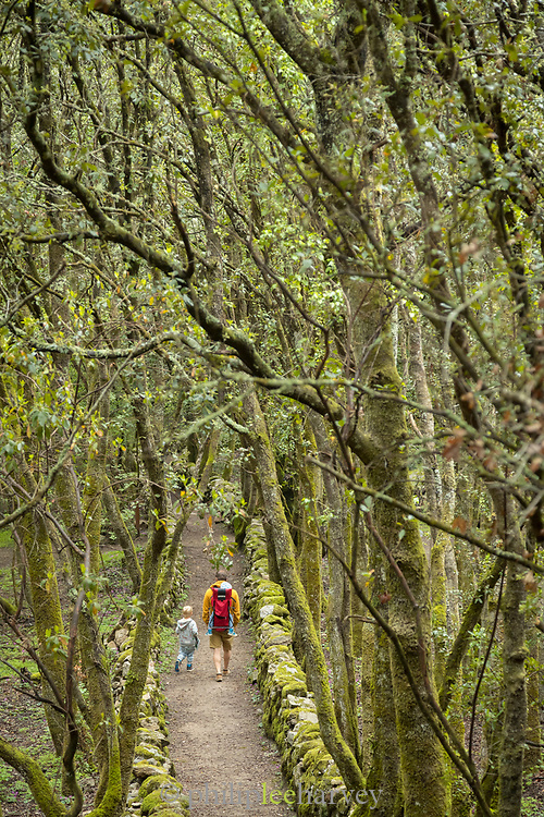 Man with boy walking on path between trees, Cuccuruzzu, Corsica, France