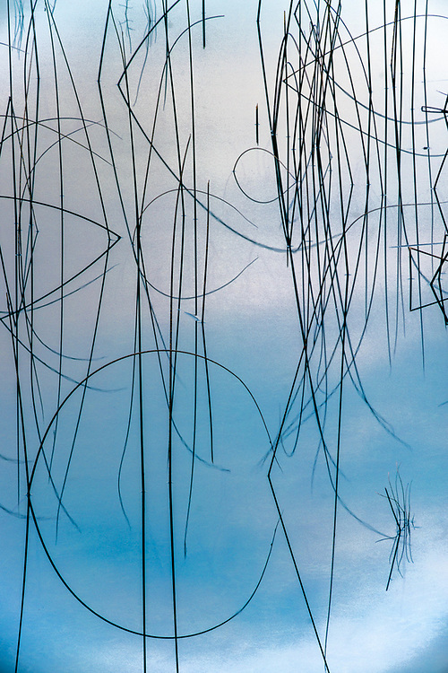 Abstract reflection of reeds in a pond, Banff National Park, Alberta, Canada