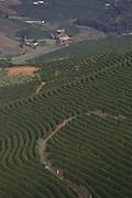 Orizania_MG, 02 de Fevereiro de 2015<br /> <br /> Na foto, detalhes do cafe produzido pelo produtor rural Jaci de Albergaria Gomes em sua propriedade.<br /> <br /> Foto: LEO DRUMOND / NITRO