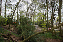 Wendover, UK. 28th April, 2021. A section of ancient woodland at Jones Hill Wood in the Chilterns AONB. Felling of Jones Hill Wood, which contains resting places and/or breeding sites for pipistrelle, barbastelle, noctule, brown long-eared and natterer's bats and is said to have inspired Roald Dahl's Fantastic Mr Fox, has resumed after a High Court judge refused environmental campaigner Mark Keir permission to apply for judicial review and lifted an injunction preventing further felling for the HS2 high-speed rail link. Credit: