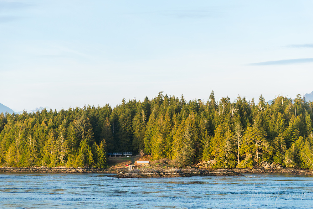 Forest and sea is illuminated by golden hour light, seen along the shores of Tofino, British Columbia, Canada