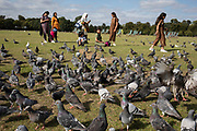 Frenzy of feral pigeons feeding from food being thrown to then in Hyde Park in London, England, United Kingdom. Feral pigeons, also called city doves, city pigeons, or street pigeons, are pigeons that are derived from the domestic pigeons that have returned to the wild.