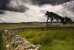 July 21, 2019 - Stone Fence And Tree With Storm Clouds, Yorkshire, England (Credit Image: © John Short/Design Pics via ZUMA Wire)