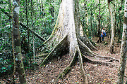 Madagascar, Ankarana Special Reserve. Roots of a ficus tree