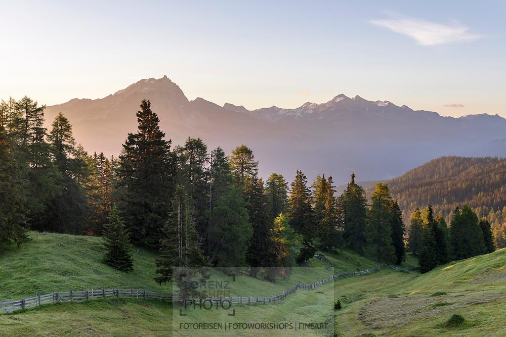 Mähwiese an einem Waldrand auf der Alp Stierva mit dem Piz Mitgel und d'Err, Parc Ela, Graubünden, Schweiz<br /> <br /> Hay meadow at the edge of a forest on the alp Stierva with Piz Mitgel and d'Err, Parc Ela, Grisons, Switzerland