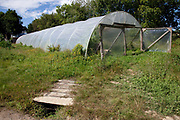 Polytunnel on an organic community farming project, Devon, UK