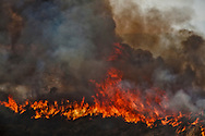 Sand Fire near Soledad Canyon Road.