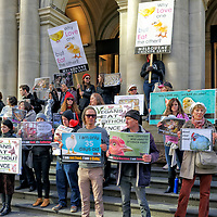 Melbourne Chicken Save rally - Saturday July 18 2015 - at Bourke Street Melbourne.