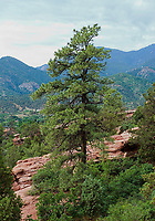 Colorado Springs; Colorado; Garden of the Gods, USA.
