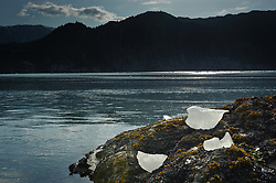 Icebergs from McBride Glacier rest in the intertidal area of a beach at the base of McConnell Ridge on Muir Inlet in Glacier Bay National Park and Preserve in southeast Alaska. The McBride Glacier, the most active glacier and only tidewater glacier in the Muir Inlet, is retreating. In the background is White Thunder Ridge.