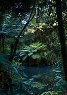 Deep in the New Zealand jungle of Pukekura Park, New Plymouth, tree ferns and forest reflect in still water. Find prints at https://prints.apkphotography.com/shop-art
