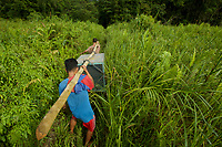 Villagers carry Prima, a 8 yr old juvenile female, in a cage to Gunung Tarak, a forest where she will be released into the wild for the first time in her life. <br /><br />West Kalimantan Province<br />Island of Borneo<br />Indonesia
