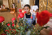 27 APRIL 2005 - SAN CRISTOBAL DE LAS CASAS, CHIAPAS, MEXICO: A woman arranges flowers for the alter in Templo de Santo Domingo in San Cristobal de las Casas, Chiapas. San Cristobal is the center of the Chiapas highlands and an important indigenous community. Fear of political violence in the area has diminished in recent years and the tourism industry has rebounded as a result.  PHOTO BY JACK KURTZ