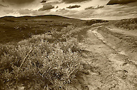 Sepia Print, old dirt prairie trail, Claybank Brick Plant National Historic Site, Saskatchewan