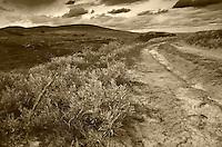 Sepia Print, old dirt prairie trail, Claybank Brick Plant National Historic Site, Saskatchewan