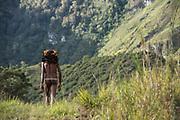 Dani tribe man (Aleks)<br /> Jiwika village<br /> Suroba<br /> Trikora Mountains<br /> West Papua<br /> Indonesia