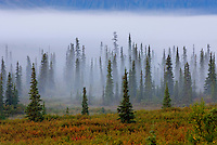 Morning fog over boreal forest Alaska
