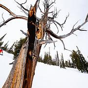 Jess McMillan makes turns in the Teton backcountry near Jackson Hole Mountain Resort.