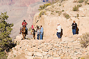 Oct. 6, 2008 -- GRAND CANYON NATIONAL PARK: A wrangler asks hikers to give right of way to tourists riding mules out of the Grand Canyon on the Bright Angel Trail on the south rim of the Grand Canyon National Park in northern Arizona. Photo by Jack Kurtz