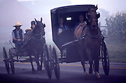 Amish buggies in morning fog, Holmes Co., Ohio