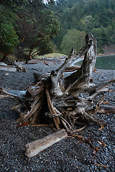 Driftwood, Deadman Cove, San Juan Island, Washington, US