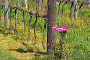 In the vineyard vines and a sign saying Tannat clone 398. Vines pruned for winter in Cordon Royat. Bodega Pisano Winery, Progreso, Uruguay, South America