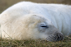 July 21, 2019 - Seal Sleeping (Credit Image: © John Short/Design Pics via ZUMA Wire)