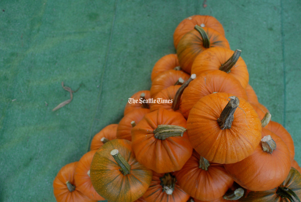 A triangular pile of pumpkins is stacked at the Bayview Corner Market. <br /> Erika Schultz / The Seattle Times