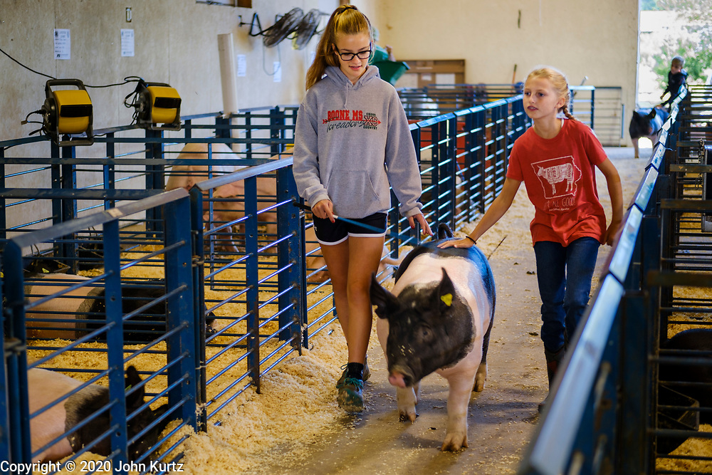 16 JULY 2020 - BOONE, IOWA: AVERY CHESNUT, 13, left, exercises her market hog in the pig barn with her cousin, MORGAN CHESNUT, 10, on the first day of the Boone County Fair in Boone. Summer is county fair season in Iowa. Most of Iowa's 99 counties host their county fairs before the Iowa State Fair. In 2020, because of the COVID-19 (Coronavirus) pandemic, many county fairs were cancelled, and most of the other county fairs were scaled back to concentrate on 4H livestock judging. Boone county scaled back its fair this year. The Iowa State Fair was cancelled completely. Boone County Emergency Management did not approve going ahead with the fair, and has advised anyone who goes to the fair to take precautions and monitor themselves for symptoms of the Coronavirus.           PHOTO BY JACK KURTZ