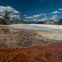 Hot water pours over terraced mineral deposits at Mammoth Hot Springs, Yellowtone National Park, Wyoming.  The red is from bacteria that thrive in these conditions.
