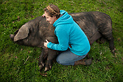 Butte County, California- February 4, 2020: Megan Brown gives one of her pigs a belly rub on her ranch in Butte County California. <br /><br />Salgu Wissmath for the HuffPost.