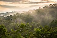 Exploring the Rainforest of the Amazone region of Brazil