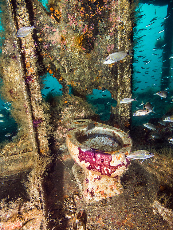 Toilet  on the Aeolus shipwreck in North Carolina, USA