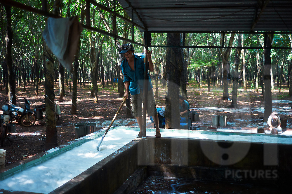 Activity in a rubber plantation outside of Phuc Luong Commune in Thai Nguyen Province, Vietnam, Southeast Asia