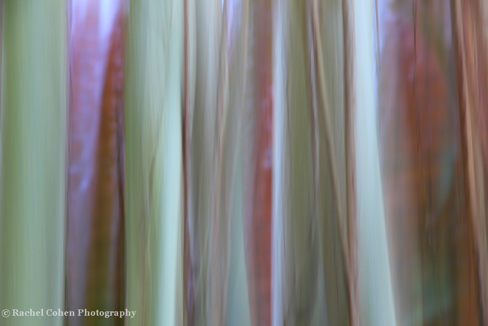"""""""Among the Vines""""<br /> <br /> Light in color, yet strong in form. A beautiful abstract vine image!!<br /> <br /> Nature Abstracts by Rachel Cohen"""