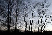 ' Dancing trees in Prospect Park '