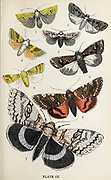 Plate IX 1. Dotted Chestnut. 2. Double - Spotted Square Spot. 3. Pine Beauty. 4. Burnished Brass. 5. Great Angle-Shades. 6. Dark Crimson Underwing. 7. Clifden Nonpareil. from the book ' The common moths of England ' by Wood, J. G. (John George), 1827-1889 Publication date 1878 in London : by G. Routledge and Sons