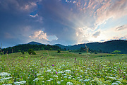 Green meadow at sunset