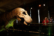 The Natural History Museum, London. Visitors in the Dinosaur gallery watch a T-Rex animatronics model.