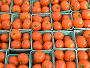 organic tomatoes on display at a green market