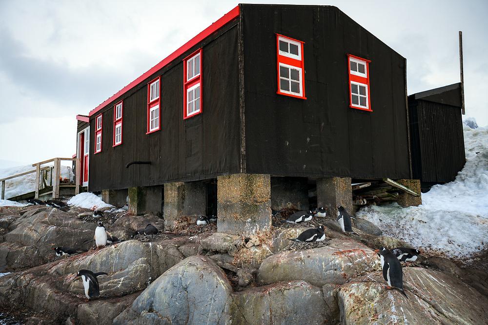 Gentoo penguins at Port Lockroy, Antarctica