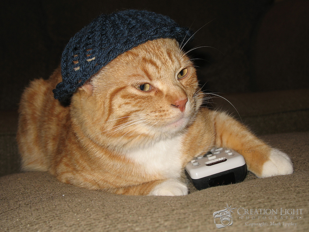 Cat with a hat and television remote