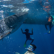 Tourist and guides snorkelling with whale shark (Rhincodon typus) by the tour banca boat, Honda Bay, Palawan, the Philppines.