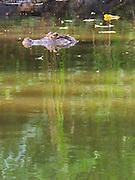El último pétalo / Parque Natural Metropolitano, Panamá.<br /> <br /> Edición de 3   Víctor Santamaría.