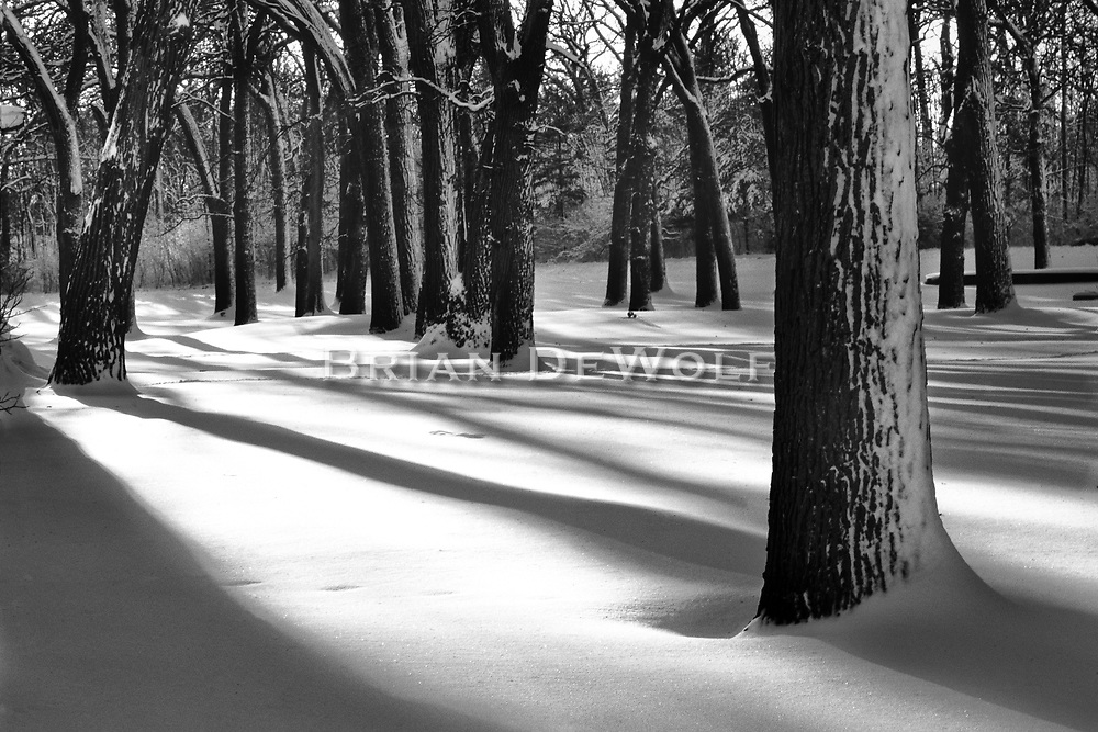 Late afternoon sunlight highlights the softness of a new fallen snow in Fabyan Forest Preserve.   Aspect Ratio 1w x .667h