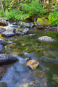 Nickel Creek, Mount Rainier National Park, Washington