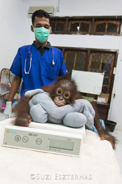 Dr. Prima Anggara Sigit, Veterinarian, examining one-year old infant