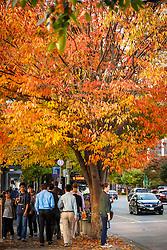North America, United States, Washington, Bellevue.